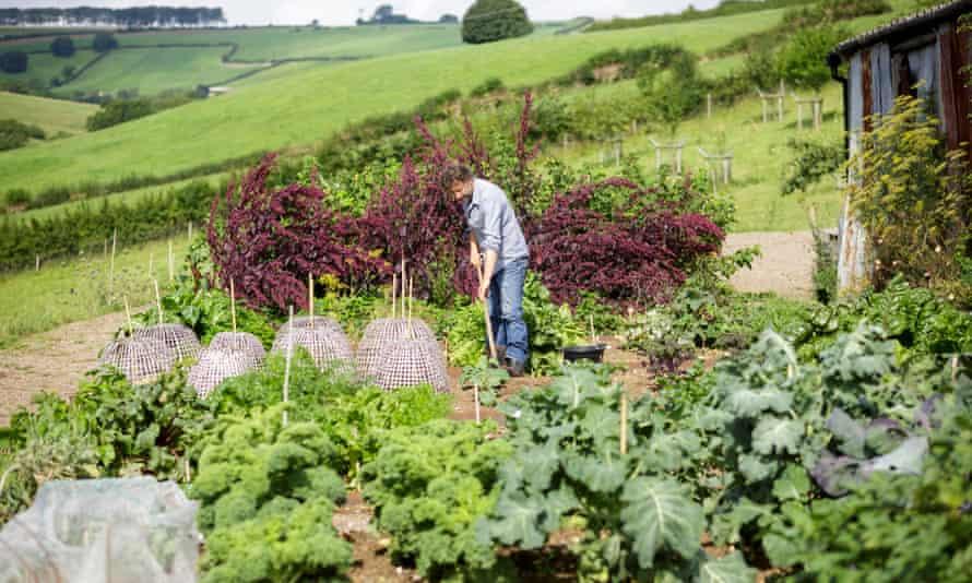 Making the beds: Dan in the vegetable garden.