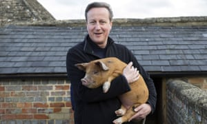 David Cameron holds a piglet