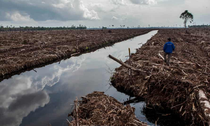 Clearing and drainage of peat forests in Pulau Padang, Sumatra, Indonesia.