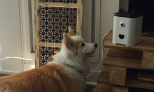 The world's first smartphone for pets.