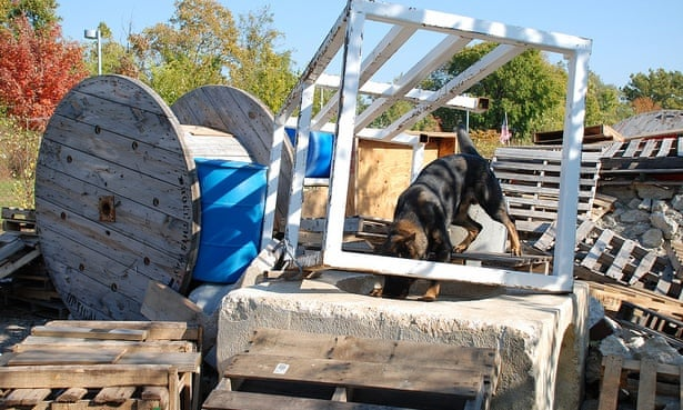 Cadaver dogs: attending camp with the canines trained to