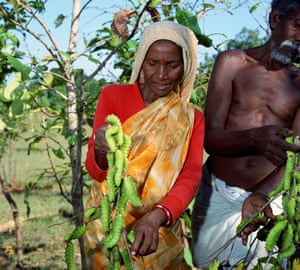 EcoTasar at work - farmer with tasar silk worms