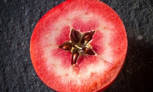Apple - 'Redlove' variety.