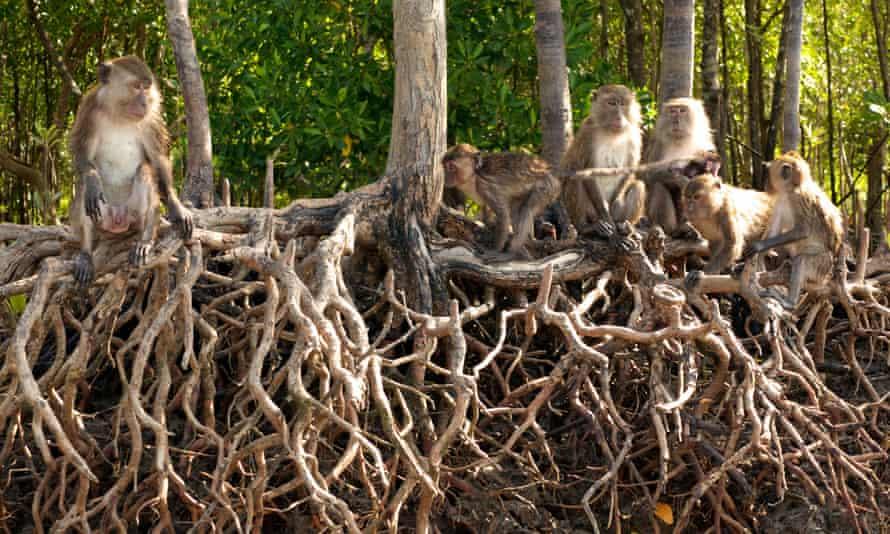 Koh Lanta marine national park.