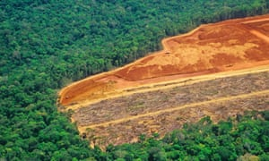 Deforestation in the Amazon. The biggest loss of forests since 1990 occurred in the tropics, particularly in South America and Africa.