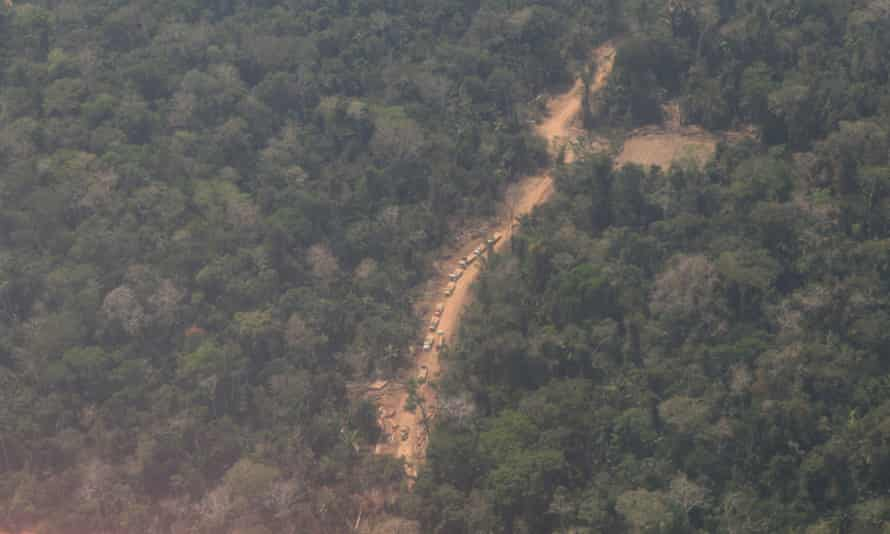 Peru illegal logging