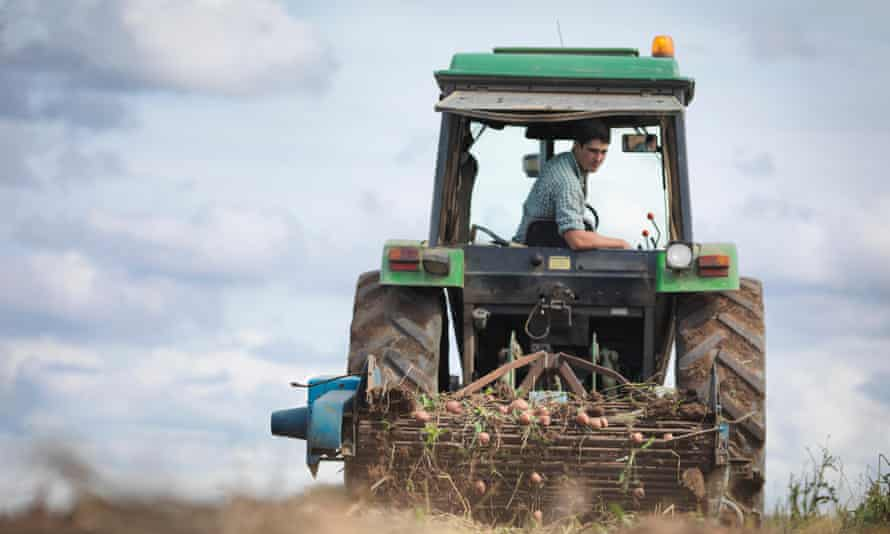 man harvesting potatoes
