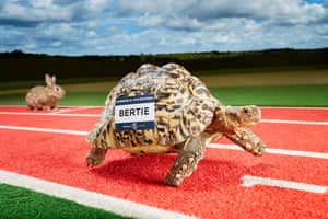 Bertie - Fastest Tortoise