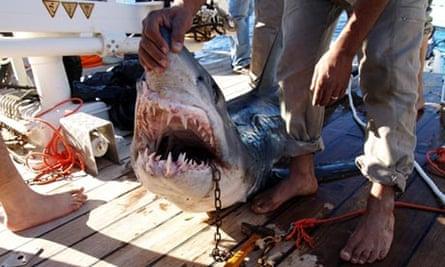Shark attack Sharm el-Sheikh