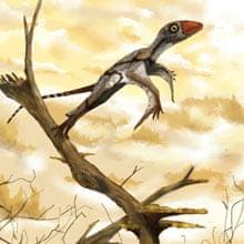 Dinosaurs: a hypothetical pterosaur ancestor