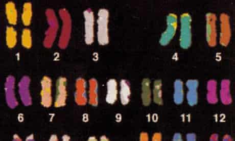 Multicolour FISH of chromosomes