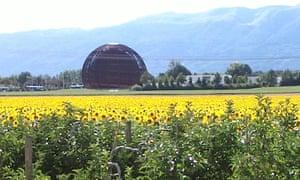 CERN sunflowers