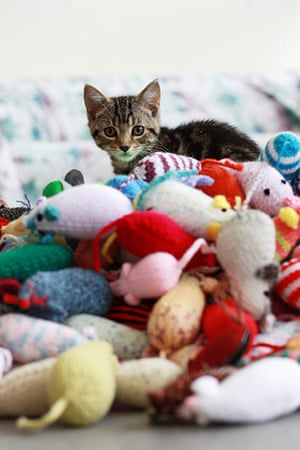 Battersea cats: Battersea cats enjoy their handknitted mice
