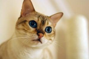 Cutest cat: Bailey