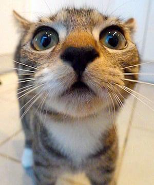 Cutest cat: Arthur