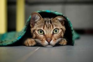 Cutest cat: Fenton