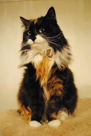 Cutest cat: Bow