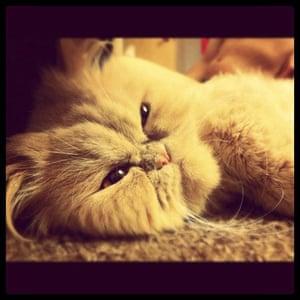 Cutest cat: Chip