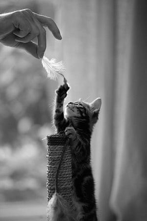 Kittens: Ed Moore