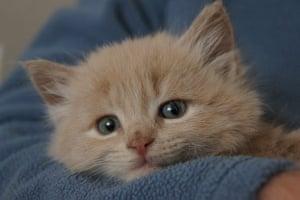 Kittens: Gilly