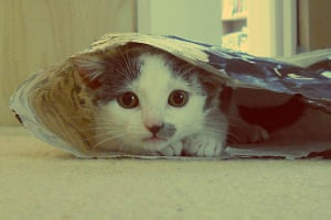 Kittens: Milo Whiffenpoof
