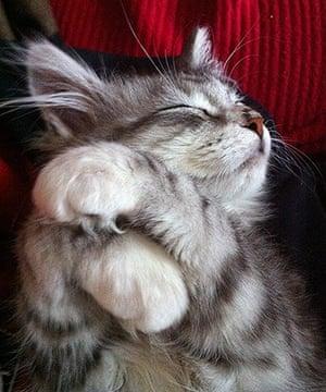 Kittens: Merve