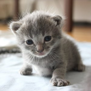 Kittens: Truffle