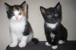 Kittens: Lady and Tramp