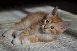 Kittens: Prah