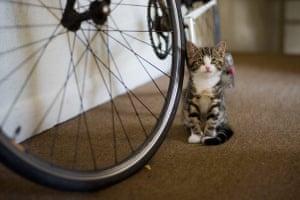 Kittens: Crumpet