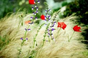 Chelsea plant trends: Tom Hoblyn's garden for Chelsea 2012