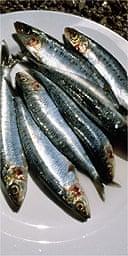 Sardines / sea food / fish