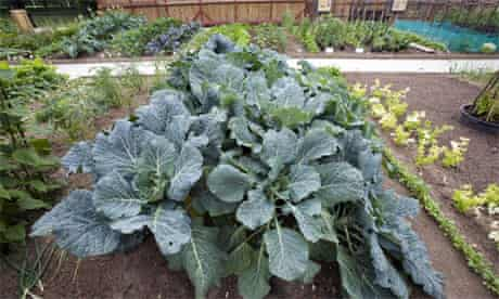 Vegetables growing on The Dig for Victory: War on Waste organic allotment in St James's Park, London