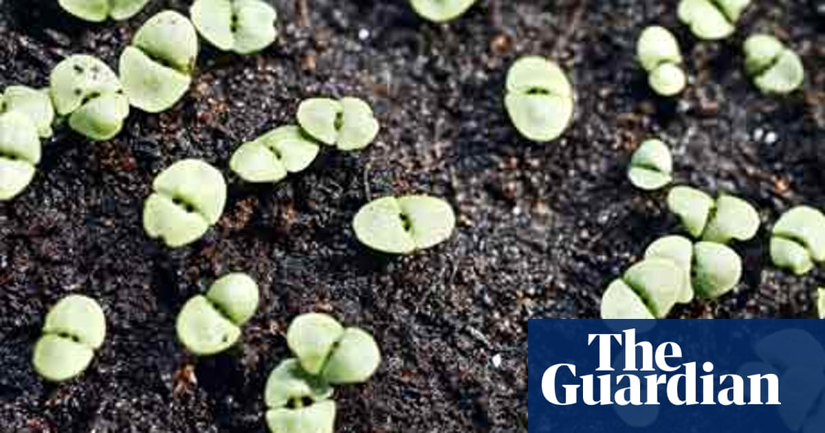 Sow Right Tips And Tricks For Veg Seeds Life And Style The