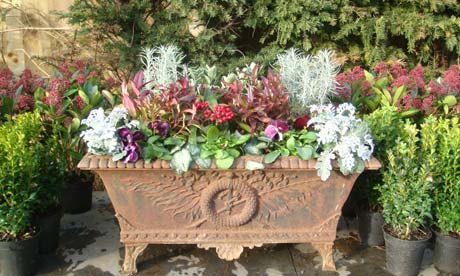 Anatomy Of A Garden Winter Containers Life And Style
