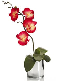 2ab0182b4 Orchid care for beginners | Life and style | The Guardian