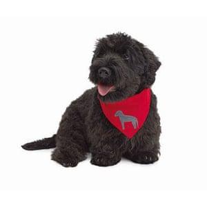 Christmas gifts: Pets: Dog bandana