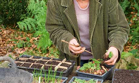 Carol Klein urges us to grow seeds, being careful not to sow