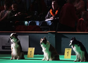 Crufts winners: Dogs take part in an obedience test at Crufts
