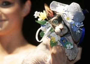 Pets fashion week: A cat at pets fashion week