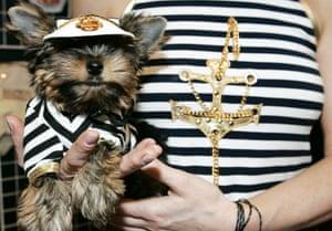 Pets fashion week: A dog at Pets Fashion Week