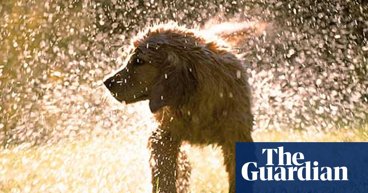 802f19f29 How to keep pets cool on hot days | Life and style | The Guardian