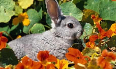 A rabbit in a garden in summer