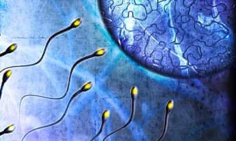 Sperm swimming towards egg