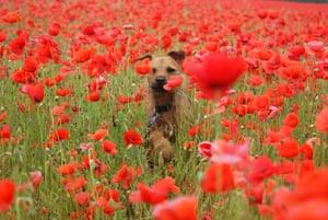 Dog photography: Winner