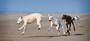 Dog photography: Winner of the Dogs at Play category