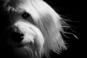 Dog photography: Winner of the Dog Portrait category