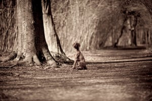Dog photography: A runner up in the Dog Portrait category