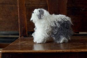 Best in Show: Best in Show: English Sheepdog