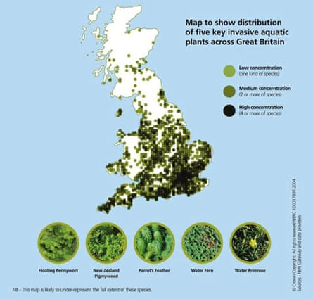 Graphic showing the distribution of invasive aquatic plants across the UK